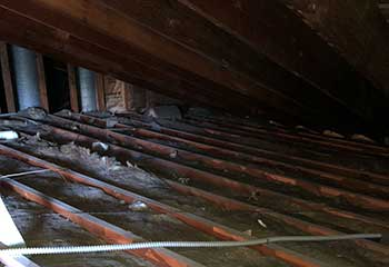 Commercial Rodent Proofing Project | Attic Cleaning San Bruno, CA