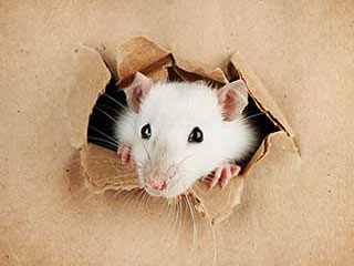 Rodent Proofing Service | Attic Cleaning San Bruno, CA