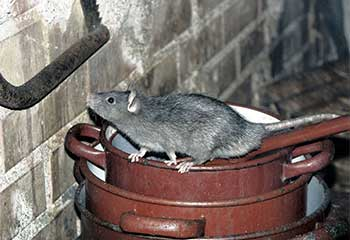 Rodent Proofing | Attic Cleaning San Bruno, CA